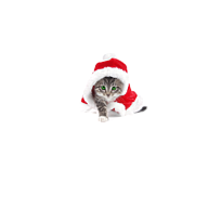 Bluza Christmas Kitty - Bluzy