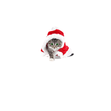 Bluza Christmas Kitty